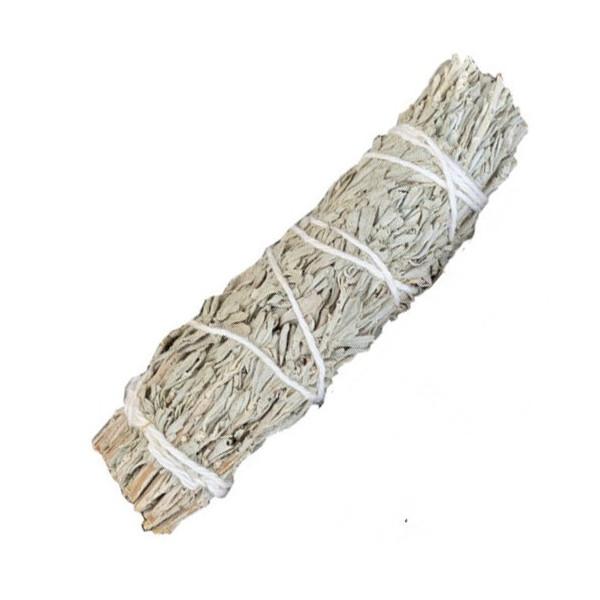 Weißer Shasta Salbei in Bündeln von 30 gr